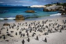 Boulders beach, i pinguini Africani