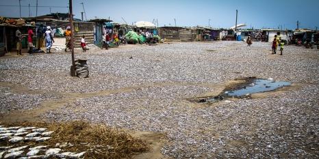 Jamestown, le sardine pescate messe ad essiccare al sole nella piazza principale del villaggio, vengono anche crreati dei corridoi per il passaggio delle persone.