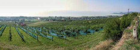 vigne-1
